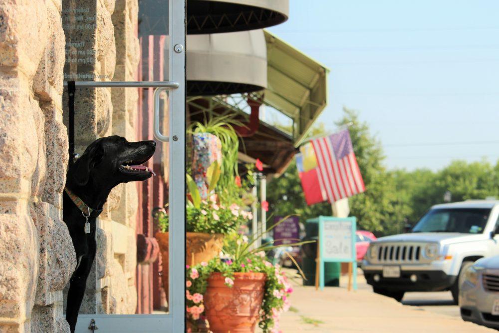 Main Street Shops Dog