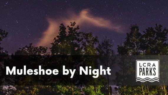 Muleshoe by night