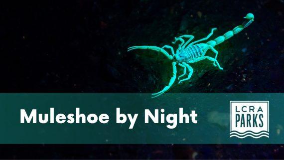 Muleshoe by night2