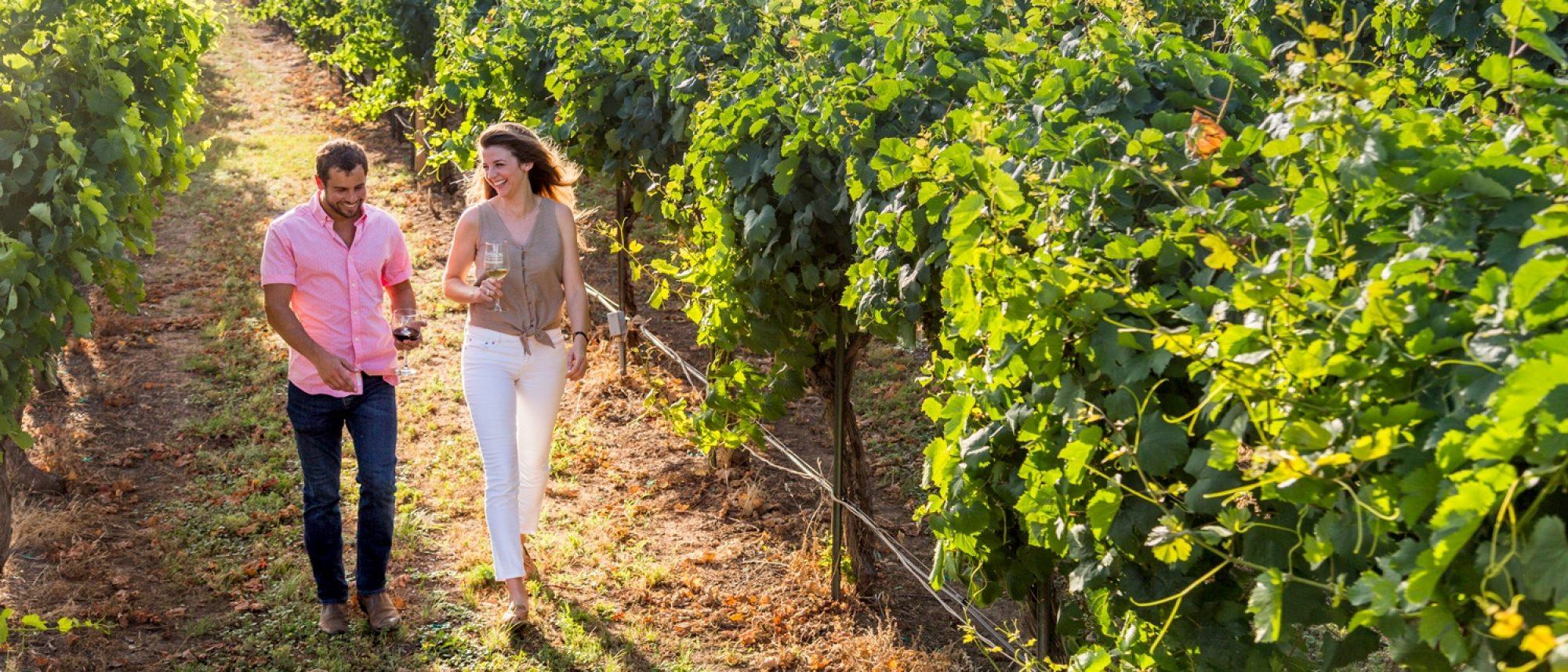 Couple walking in vinyard wide