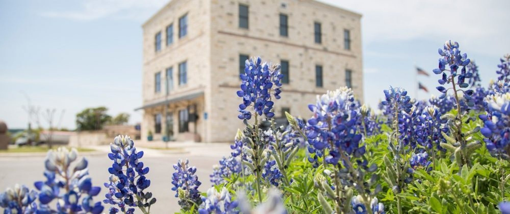 Marble Falls Visitor Center Bluebonnets