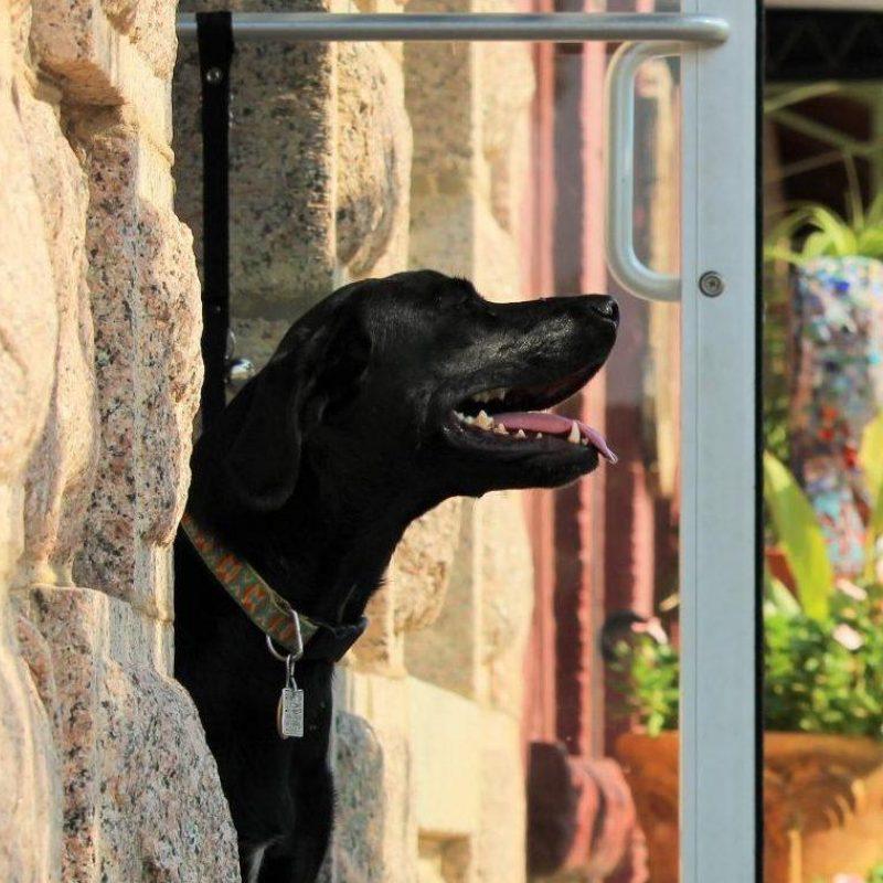 Main Street Shops Dog Hero