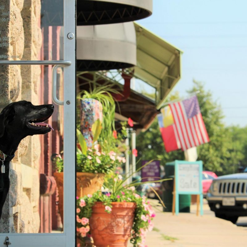 Main Street Shops Dog